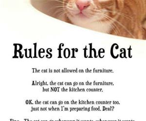 rules for the cat funny picture