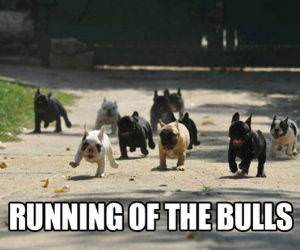 Runing of the Bulls funny picture