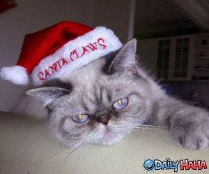 Santa Claws funny picture