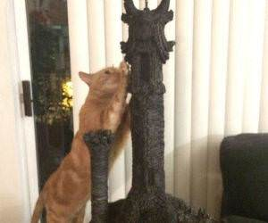 sauron tower cat funny picture