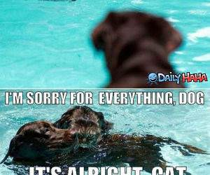 Save Me Dog funny picture