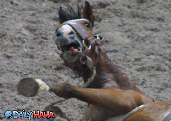 Image result for scared horse funny