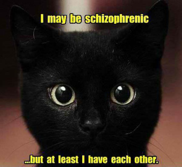 Schizophrenic Cat funny picture