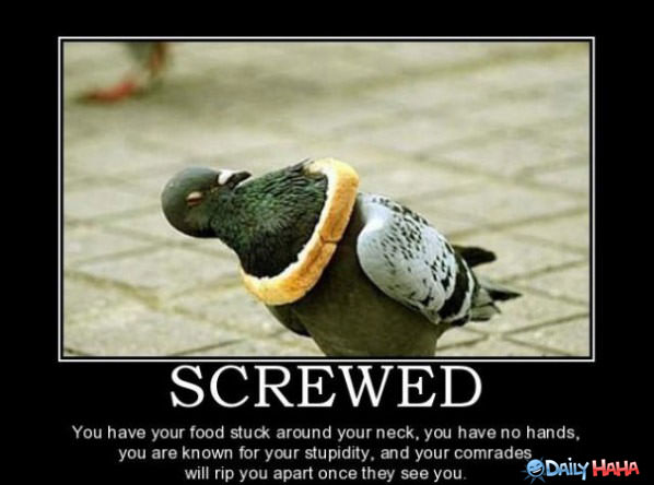 Screwed funny picture
