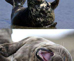 seals laughing funny picture