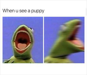 seeing a puppy