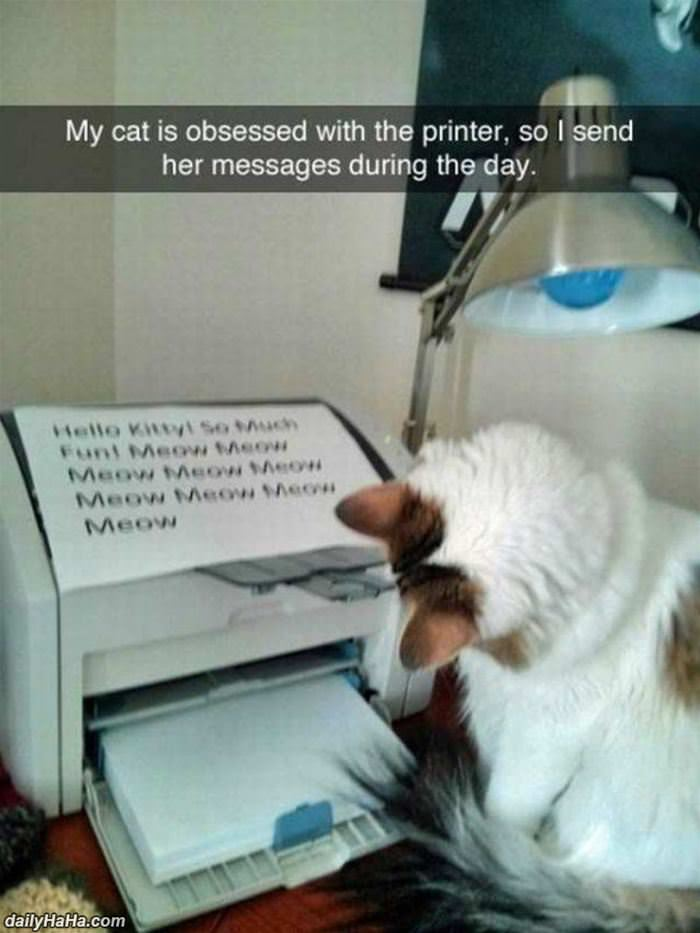 send my cat messages funny picture