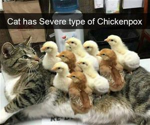 severe case of chickenpox funny picture