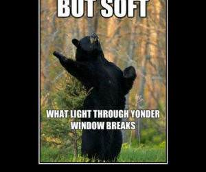 Shakesbear funny picture