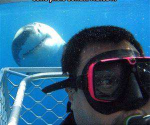 shark selfie photobomb funny picture