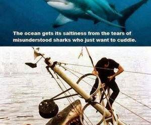 sharks are misunderstood funny picture