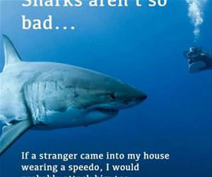 sharks arent so bad funny picture