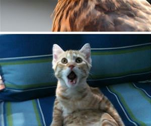 shocked animals funny picture