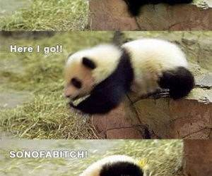 Panda Drop Off funny picture