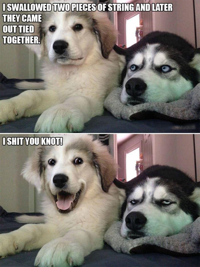 silly pun knot funny picture