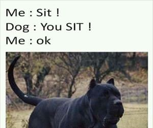 sit no you sit
