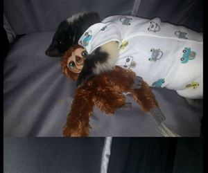 skunk had surgery funny picture
