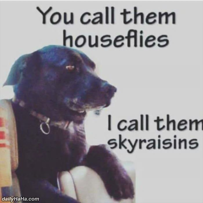 sky raisins funny picture