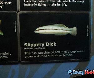 Slippery Dick funny picture