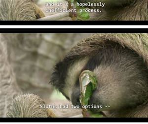 sloths are great funny picture