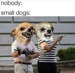 small dogs ... 2
