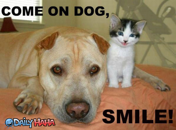 Smile Dog funny picture