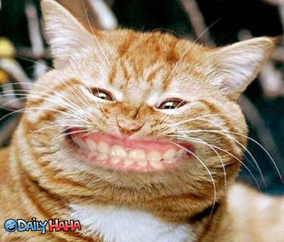 smiling_big_cat.jpg