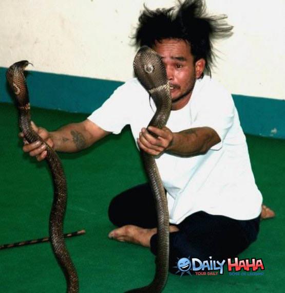 http://www.dailyhaha.com/_pics/snake_idiot.jpg