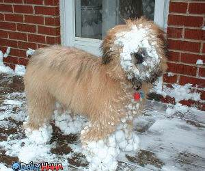 snow faced dog