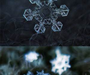 Captured Snowflakes funny picture