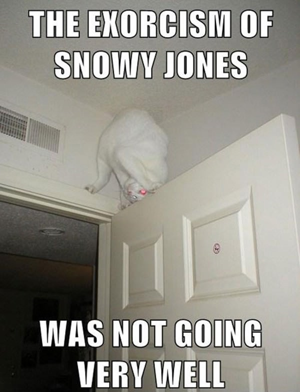 Snowy Jones funny picture