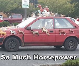 so much horsepower funny picture