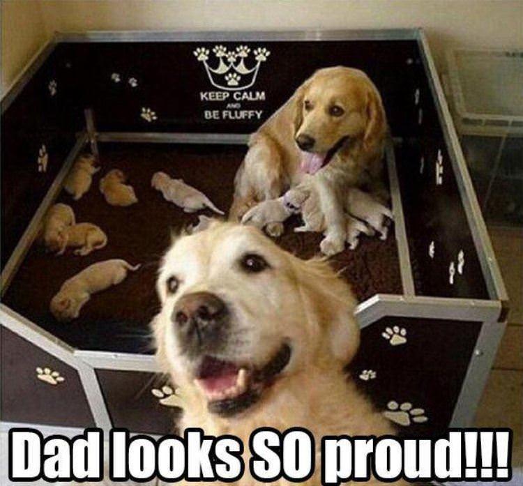So Proud Dog Dad