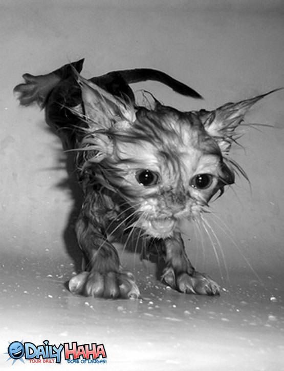 Soaked_Kitten
