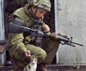 Soldier petting a kitten.