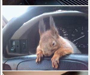 Squirrel Buddy funny picture
