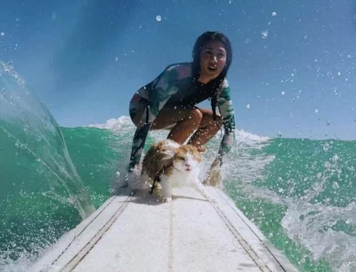 some-cat-surfing.jpg