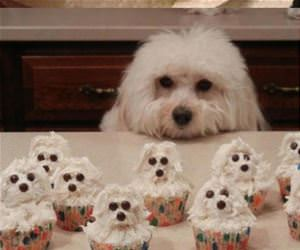 some cool cupcakes funny picture