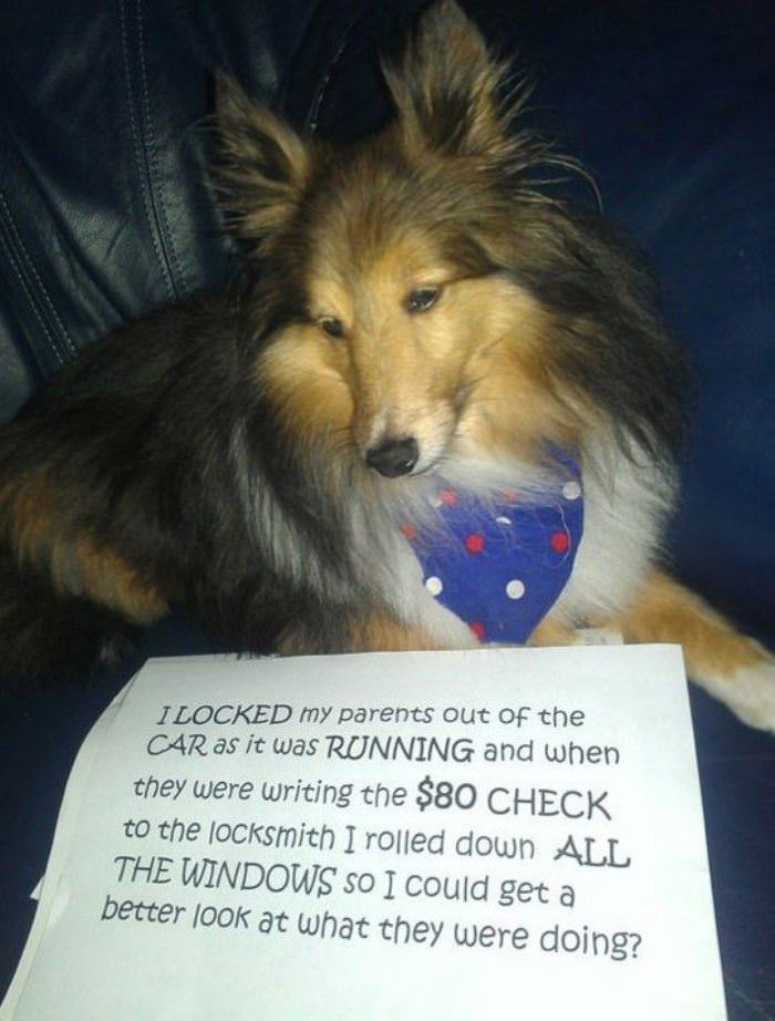 some dog shaming funny picture