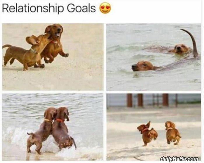 some good relationship goals funny picture