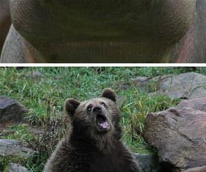 some very majestic animals funny picture
