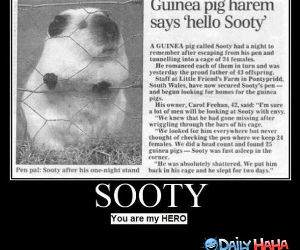Sooty funny picture