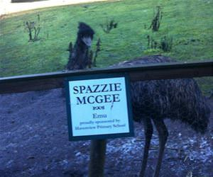 spazzie funny picture