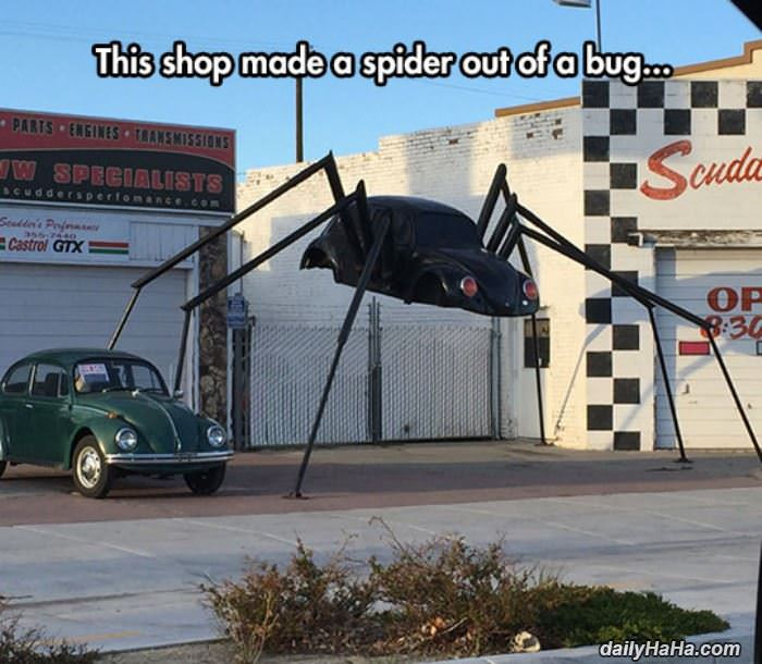 spider bug funny picture