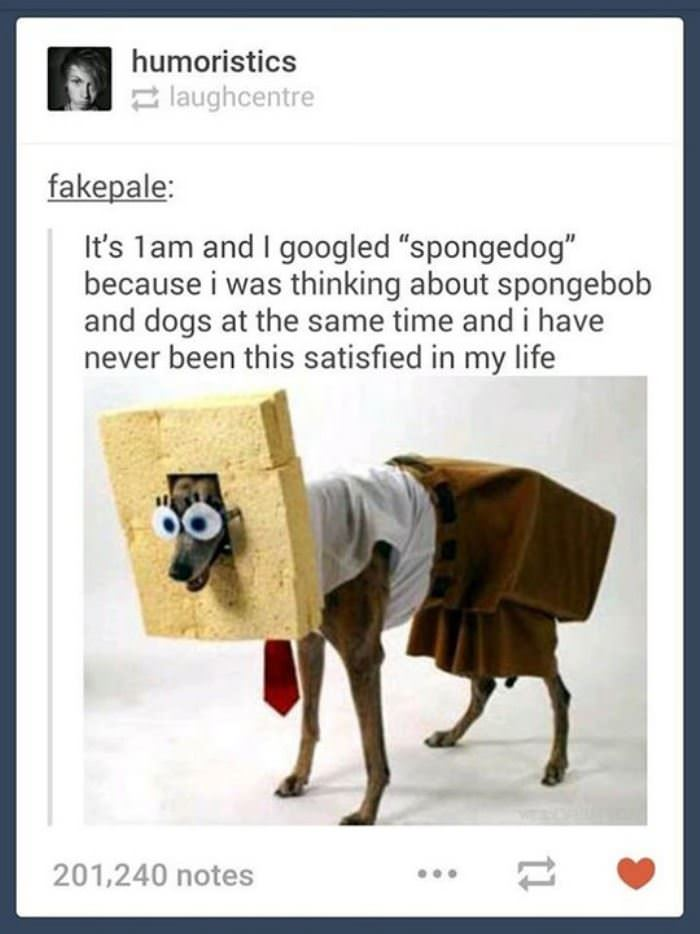spongedog funny picture