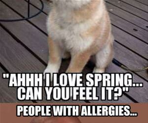spring time allergies funny picture