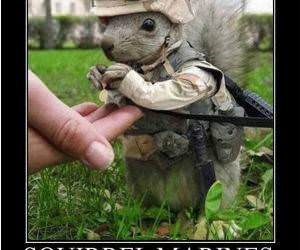 Squirrel Marine funny picture