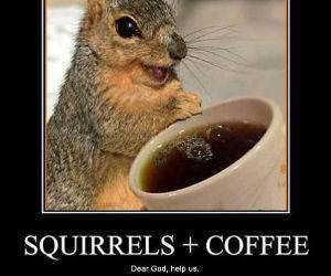 Squirrels and Coffee funny picture