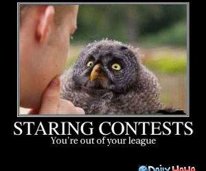 Staring Contest funny picture