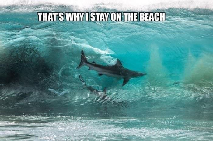 staying on the beach funny picture